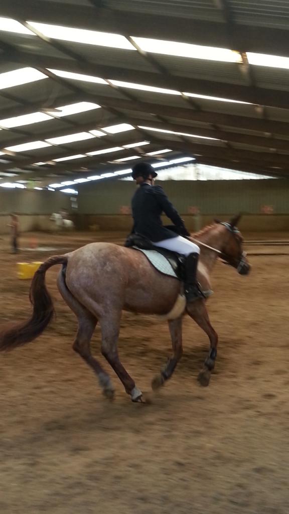 Moi et les chevaux screenshot_2013-06-16-18-29-33